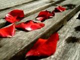 煌めくのは、情熱の赤一色。